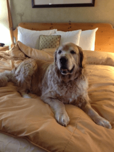 Dog Friendly Accommodations